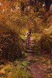 年轻女人在森林里用在她的头的手观察自然 库存照片