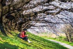 年轻女人在樱花庭院里坐一个春日 行樱花树在京都,日本 免版税库存图片