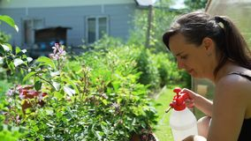 年轻女人浇灌的花在庭院里 股票录像