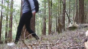 年轻女人游人的脚有背包的走在女性背包徒步旅行者的森林腿的审阅木头在期间 影视素材