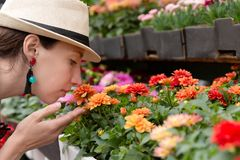 年轻女人购物在户外新都市花市场上,买和采摘从大品种五颜六色花卉 库存图片