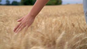 年轻妇女或少年女性女孩递感觉金黄大麦、玉米或者麦子庄稼的领域的上面 股票录像