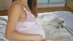 年轻孕妇微笑着 上星期怀孕 猫看她的女主人的腹部 股票视频