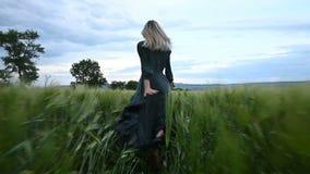 年轻愉快的白肤金发的女孩在一块绿色麦田跑在晚上以雨天空为背景 从的看法 股票视频
