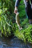 年轻成人渔夫在手中捉住了一条大鳟鱼和举行它 免版税库存图片