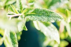 年轻新芽在庭院里,盖用露滴 春天概念 库存图片