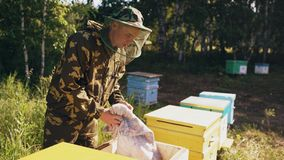 年轻检查的蜂农人开放木蜂箱,当工作在蜂房时 免版税库存照片