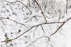 年轻森林在冬天 库存图片