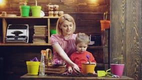 盆的植物的育儿 年轻沃土和新的花盆的花匠移植的植物 花盆在家 股票视频