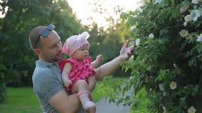 年轻爸爸拿着桃红色礼服的逗人喜爱的婴儿女孩并且在摄影城市公园显示她的白色灌木花