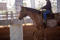 年轻牛仔骑在桶赛跑的事件的马在圈地 库存照片