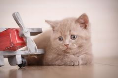 年轻猫飞行员 免版税库存照片