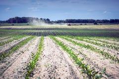 年轻玉米的领域,在结束时一台自走喷雾器部署 库存图片