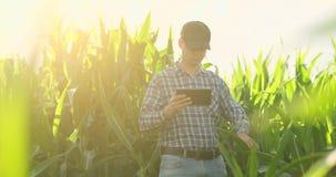 年轻男性农艺师或农业工程师观察与数字片剂的绿色米领域和笔对农学 影视素材