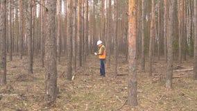 年轻白种人男性林务员在森林损伤和树皮甲虫,森林的有益健康的砍伐里检查树 股票视频