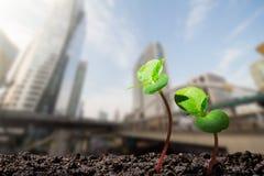年轻绿色新芽用水从在被弄脏的城市的土壤下降长大有软的阳光背景 库存图片