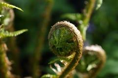 年轻绿色蕨在一个植物园里 免版税库存图片