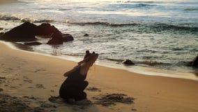 年轻美女舒展做瑜伽反对海洋 影视素材