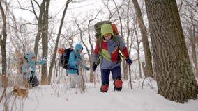 年轻运动员徒步旅行者在冬日走在森林里,跨步在随风飘飞的雪,orienteering的体育 股票视频