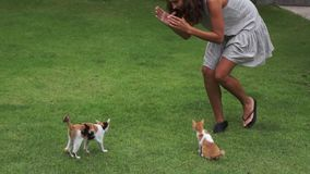 年轻逗人喜爱的妇女有效地使用与在草围场的两只小猫在夏日 股票录像