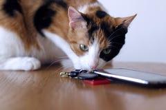 年轻catÂ七个月老好奇与手机和钥匙 库存图片