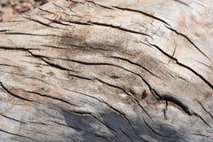 年迈的木纹理波浪线样式 免版税库存图片