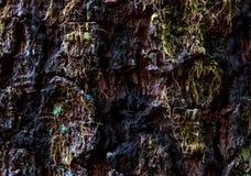 年迈的破旧的树皮关闭与小青苔 库存图片