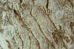年迈的自然日本树皮纹理和背景 免版税图库摄影