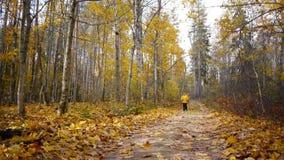 年迈的运动的妇女凹凸部在秋天森林里 股票录像