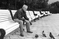年长人哺养的鸠在公园 库存图片