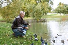 年长人哺养的鸭子在公园 库存图片