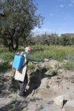 年长农夫杀虫剂喷洒的杂草 免版税库存图片