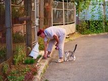 年长妇女喂养离群猫 免版税库存照片