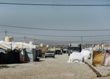 22 05 2017年,Kawergosk,伊拉克 :过度拥挤的难民营在有逃跑从的难民的伊拉克是或伊斯兰教国家 免版税图库摄影