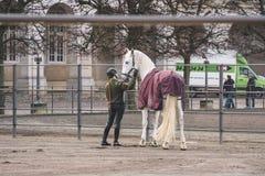 2019年2月20日 丹麦 哥本哈根 一匹马的训练旁路适应在城堡克里斯蒂安堡的皇家槽枥 库存照片