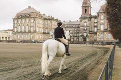 2019年2月20日 丹麦 哥本哈根 一匹马的训练旁路适应在城堡克里斯蒂安堡的皇家槽枥 免版税库存照片