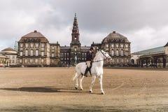2019年2月20日 丹麦 哥本哈根 一匹马的训练旁路适应在城堡克里斯蒂安堡的皇家槽枥 库存图片