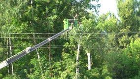 2017年7月18日 俄国 多莫杰多沃 早晨 切开从站点的高木材 在阶段的推力工作与锯 影视素材