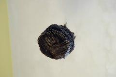 并且蜂蜜梳子 免版税库存图片