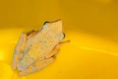 并且黄色青蛙 免版税图库摄影