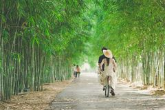 幸福夫妇乘驾一辆自行车在公园 免版税库存照片