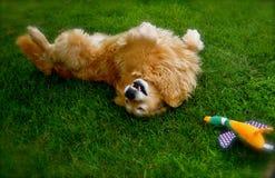 幸福是一个新的狗玩具 库存照片