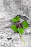 幸福-与四棵叶子三叶草的储蓄照片的片刻 免版税图库摄影