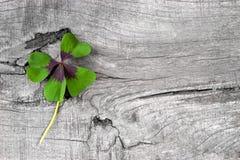 幸福-与四棵叶子三叶草的储蓄照片的片刻 库存图片