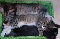 幸运的小猫睡眠 免版税库存图片