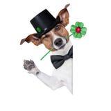 幸运的狗 免版税库存图片