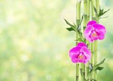 幸运的竹子和两朵兰花花在自然绿色背景 免版税库存图片