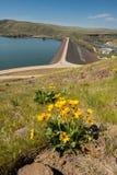 幸运的高峰水坝在有黄色arrowleaf balsamroot的爱达荷开花 免版税库存照片