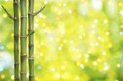 幸运背景的竹子 免版税库存照片