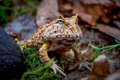 幻想有角的青蛙 免版税库存照片